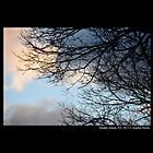Tree Branches Against Winter Evening Sky  by © Sophie W. Smith
