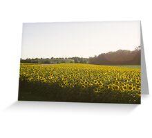 Calkins Road Sunflower Field Greeting Card