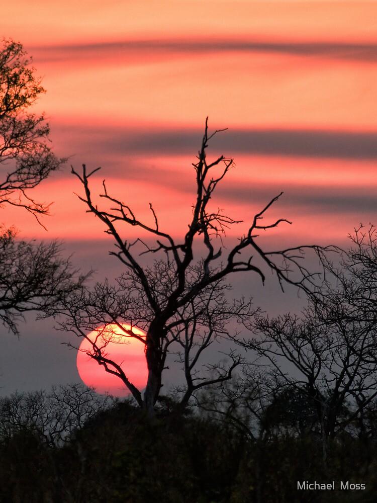 The Last Sun by Michael  Moss