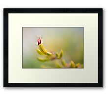 NZ Flax Framed Print