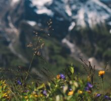 Alp Austria - Mountain Sticker