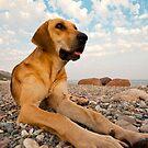 Playful Dog On The Beach by Kuzeytac