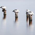 Stillness by Paul Pichugin