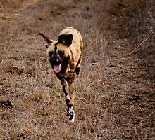 Run Doggy Run by BeccE