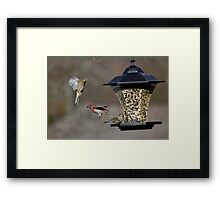 Action At The Feeder Framed Print