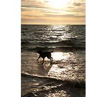Dog Beach Sunset, Fremantle, Perth, Australia Photographic Print