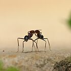 Ants... communicating? by Erland Howden