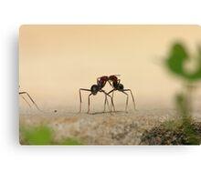 Ants... communicating? Canvas Print