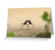 Ants... communicating? Greeting Card