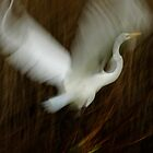 Bird in Flight by Bevin Allison