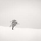 Lone tree in winter by yurybird
