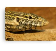 Monitor Lizard  Canvas Print