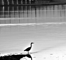 Heron - Kincardine Bridge by cmcqphotography