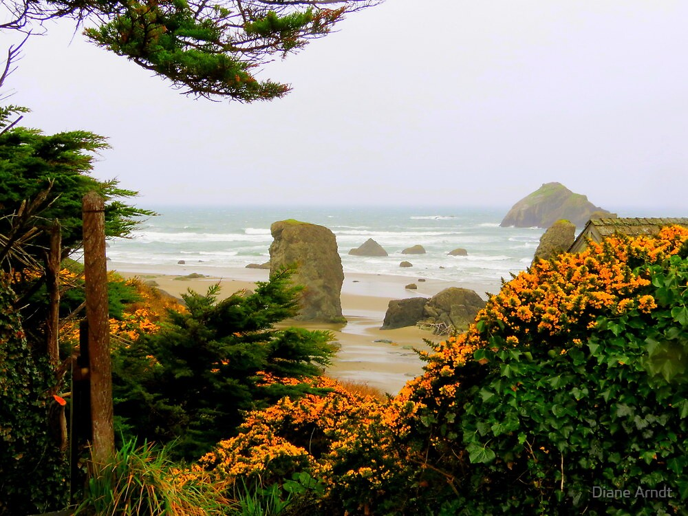 View Through The Scot's Broom..Bandon, Oregon by Diane Arndt