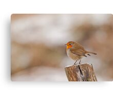 Robin Red Breast ~ Merry Christmas Canvas Print