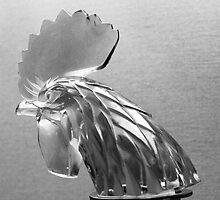 Rooster head by Thad Zajdowicz