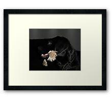Wanna play fetch ? Framed Print
