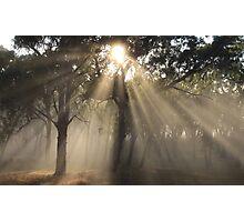 ~ Guiding Light ~ Photographic Print