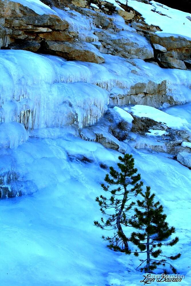 """""""Icy Cold"""" by Lynn Bawden"""