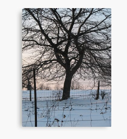 Oak in winter behind wire fence  Canvas Print