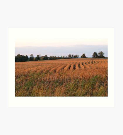 Golden fields of Grain Art Print