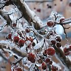 Iced Cherries by Liesl Gaesser