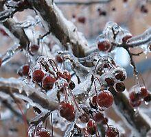Iced Cherries by Liesl Gaesser