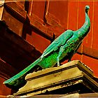 Peacock in Vatican Courtyard by LaRoach