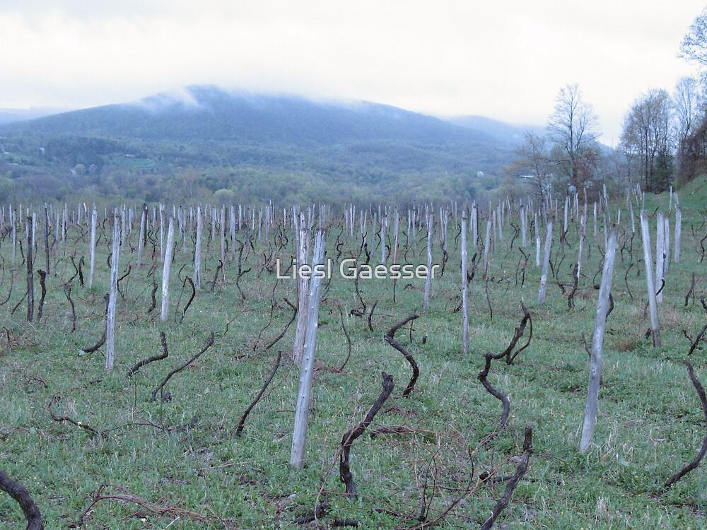 Dormant vineyard - Early Spring by Liesl Gaesser
