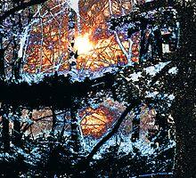 """Black Forest by David """"Oz""""  Osterczy"""