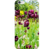 Queenstown Tulips iPhone Case/Skin