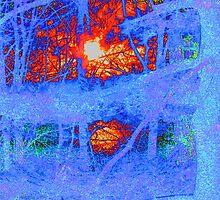 """Forest on Fire. by David """"Oz""""  Osterczy"""