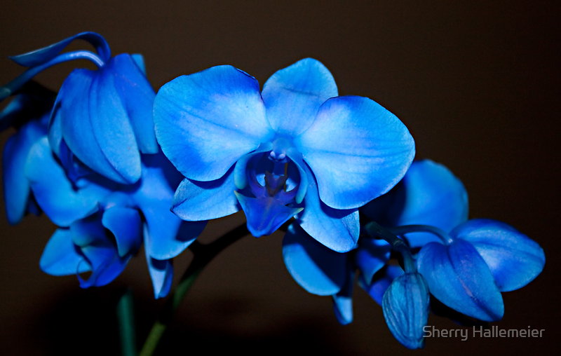 Swaying to the Blues by Sherry Hallemeier