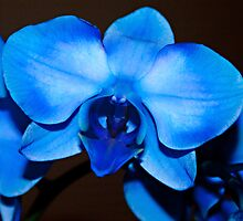 A Fancy Blue Bow by Sherry Hallemeier