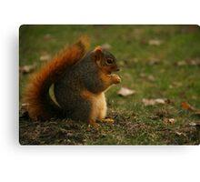 Adorable Squirrel Canvas Print