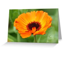 Orange Beauty. Greeting Card