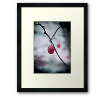 Lonely Winterberry Framed Print