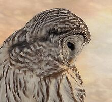 Barred Owl by michelsoucy