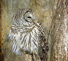 Textured Owl by michelsoucy