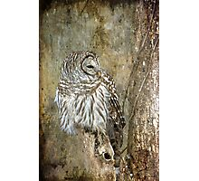 Textured Owl Photographic Print