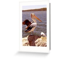 Pelican and seagul Greeting Card