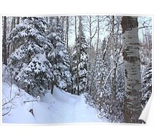 Snowy Hiking trail Poster