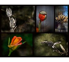 Best Flower Collage Photographic Print