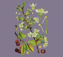 sour cherry by Alex Magnus