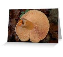 Lactarius deterrimus underside... Greeting Card