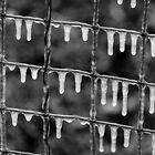 A Texas Icicle Fence by Robert Kelch, M.D.
