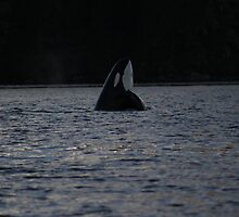Dancing Orca by tobiundsimmi