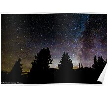 Starry Evergreens Poster