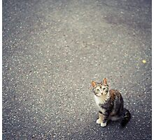 Cute little cat Photographic Print