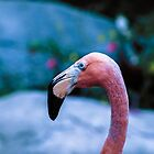 Pink flamingo by gatonegro